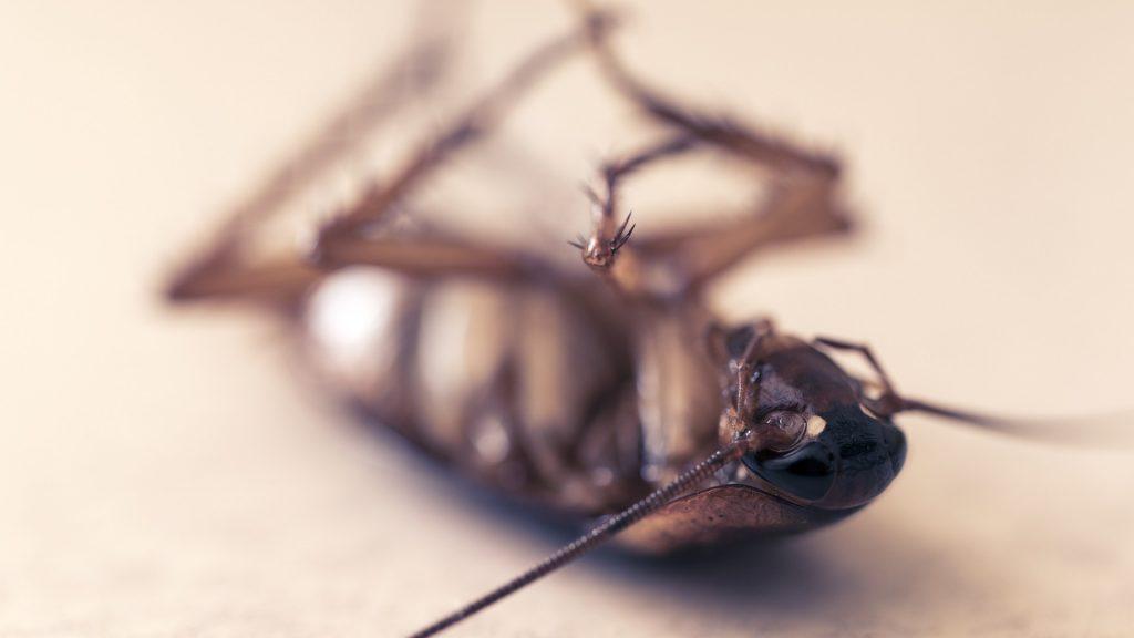 problema de las cucarachas con la humedad